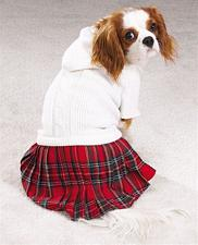 Pet Edge Back To School Jumper - Large