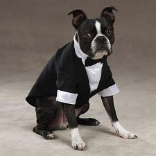 East Side Collection; Pet Edge Yappily Ever After Groom Tuxedo - Med